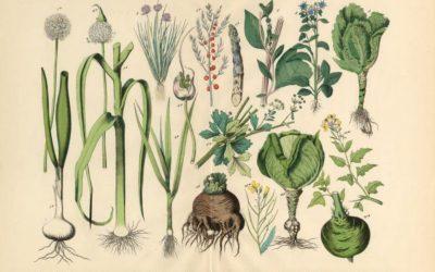 Les fruits et légumes de saison : nos alliés Régénération