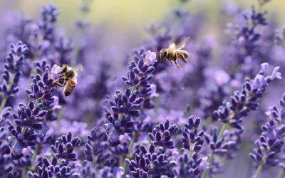 Nos abeilles nous veulent du bien